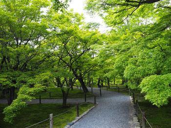 京都 (18).JPG