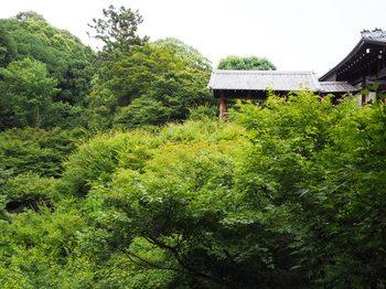 京都 (21).JPG