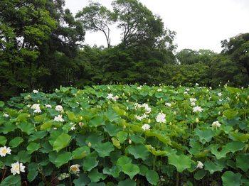 京都府立植物園 (11).JPG