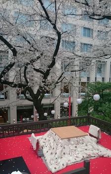 品川プリンスの桜 (4).JPG