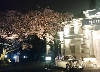 品川プリンスの桜 (5).JPG