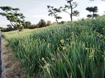城ケ島 (1).JPG