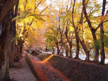 河口湖紅葉回廊 (10).JPG