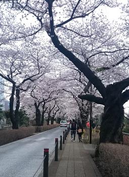 青山墓地0402 (1).JPG