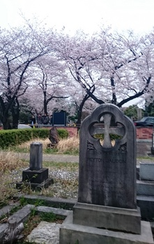 青山墓地0402 (5).JPG