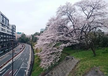 青山墓地0402 (6).JPG