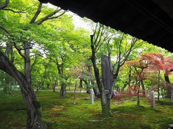 京都 (20).JPG