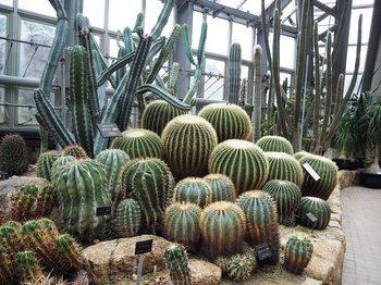 京都府立植物園 (8).JPG