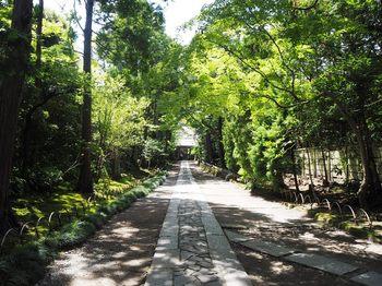 寿福寺 (3).JPG