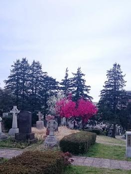 青山墓地0402 (2).JPG